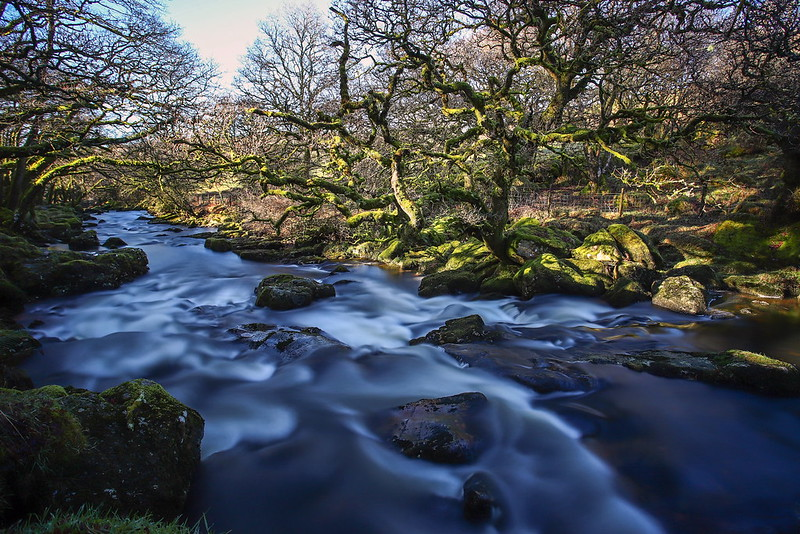 A picture of Dartmoor national park, river running next to woodland